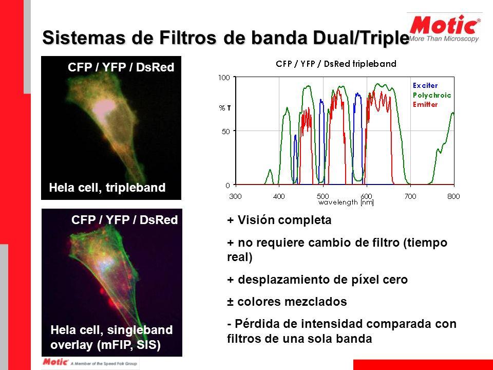 Sistemas de Filtros de banda Dual/Triple CFP / YFP / DsRed Hela cell, tripleband CFP / YFP / DsRed Hela cell, singleband overlay (mFIP, SIS) + Visión
