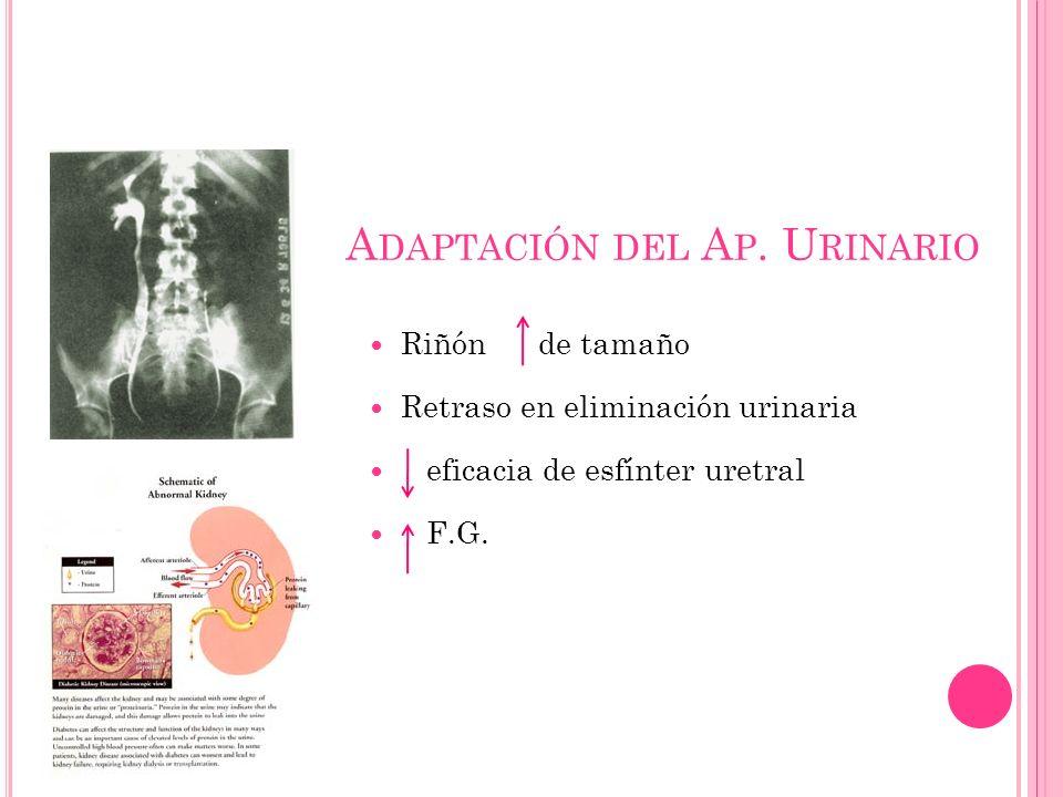 A DAPTACIÓN DEL A P. U RINARIO Riñón de tamaño Retraso en eliminación urinaria eficacia de esfínter uretral F.G.