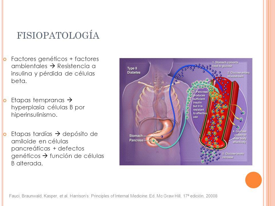 FISIOPATOLOGÍA Factores genéticos + factores ambientales Resistencia a insulina y pérdida de células beta. Etapas tempranas hyperplasia células B por