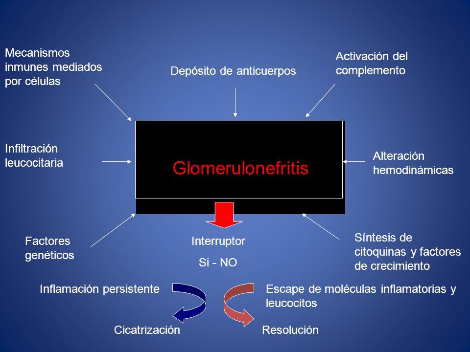 Glomerulonefritis Depósito de anticuerpos Activación del complemento Alteración hemodinámicas Síntesis de citoquinas y factores de crecimiento Mecanis