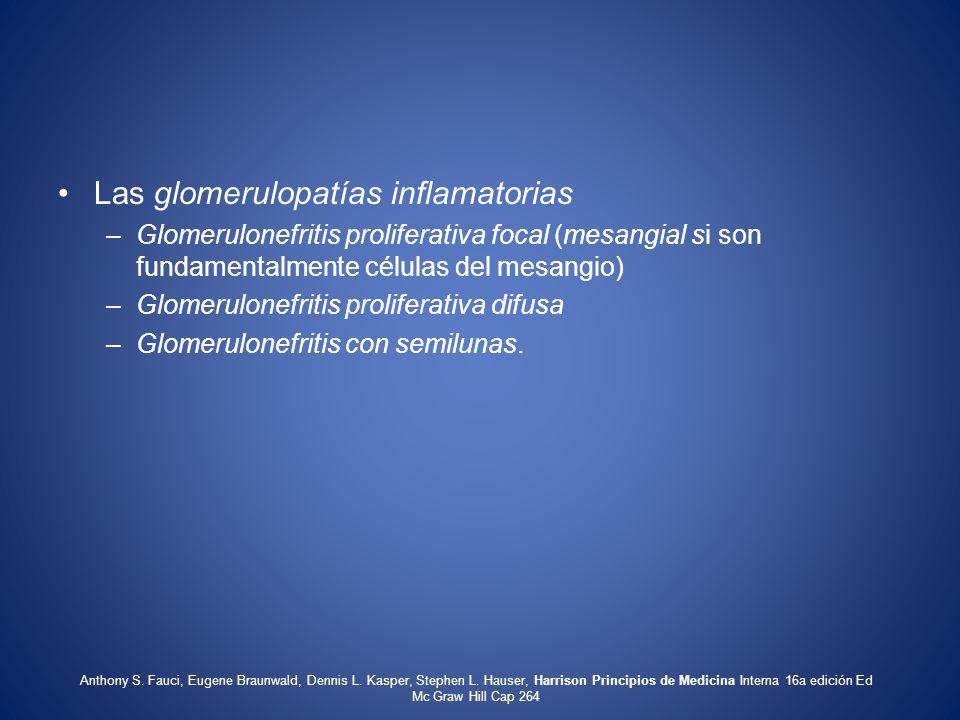 Las glomerulopatías inflamatorias –Glomerulonefritis proliferativa focal (mesangial si son fundamentalmente células del mesangio) –Glomerulonefritis p