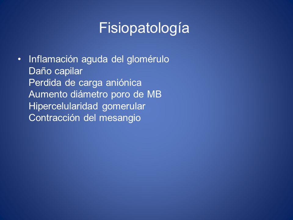 Fisiopatología Inflamación aguda del glomérulo Daño capilar Perdida de carga aniónica Aumento diámetro poro de MB Hipercelularidad gomerular Contracci