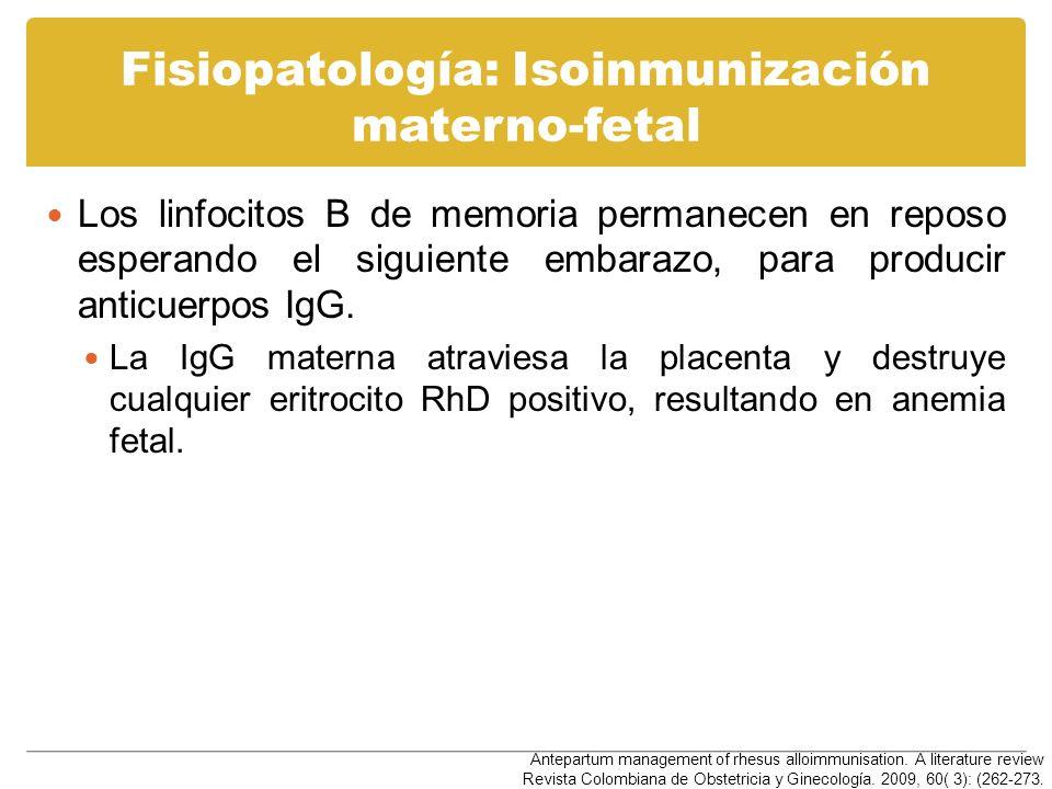 Fisiopatología: Isoinmunización materno-fetal Los linfocitos B de memoria permanecen en reposo esperando el siguiente embarazo, para producir anticuer