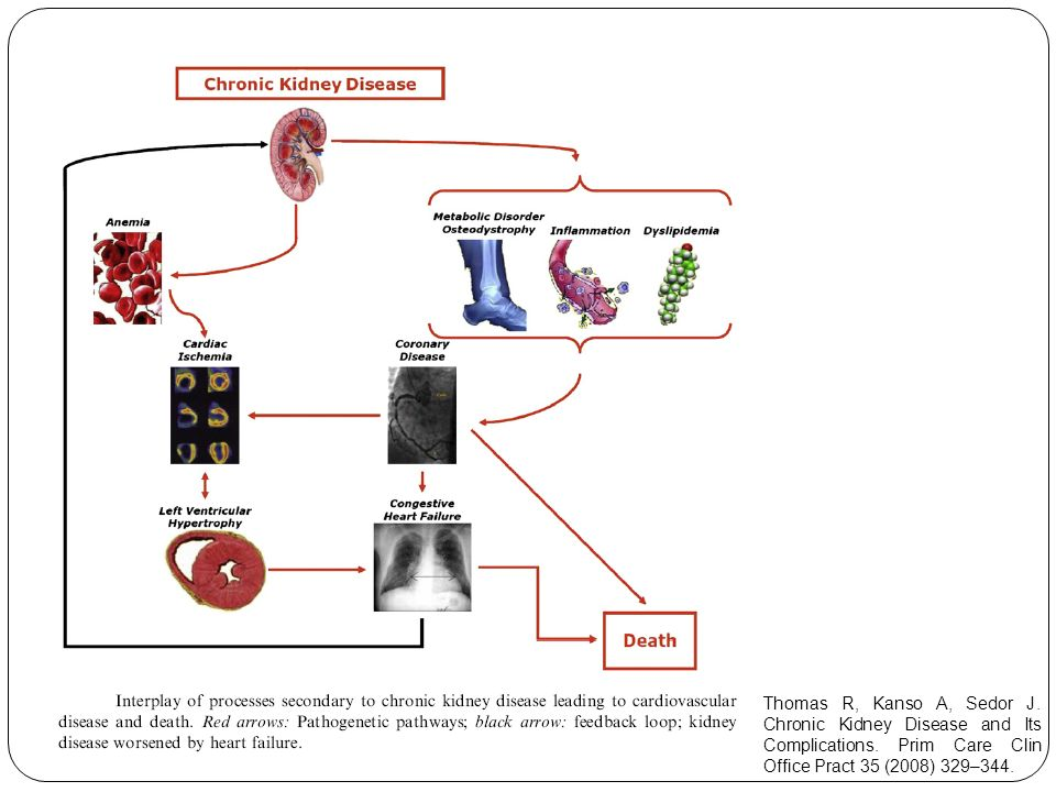 Thomas R, Kanso A, Sedor J. Chronic Kidney Disease and Its Complications. Prim Care Clin Office Pract 35 (2008) 329–344.