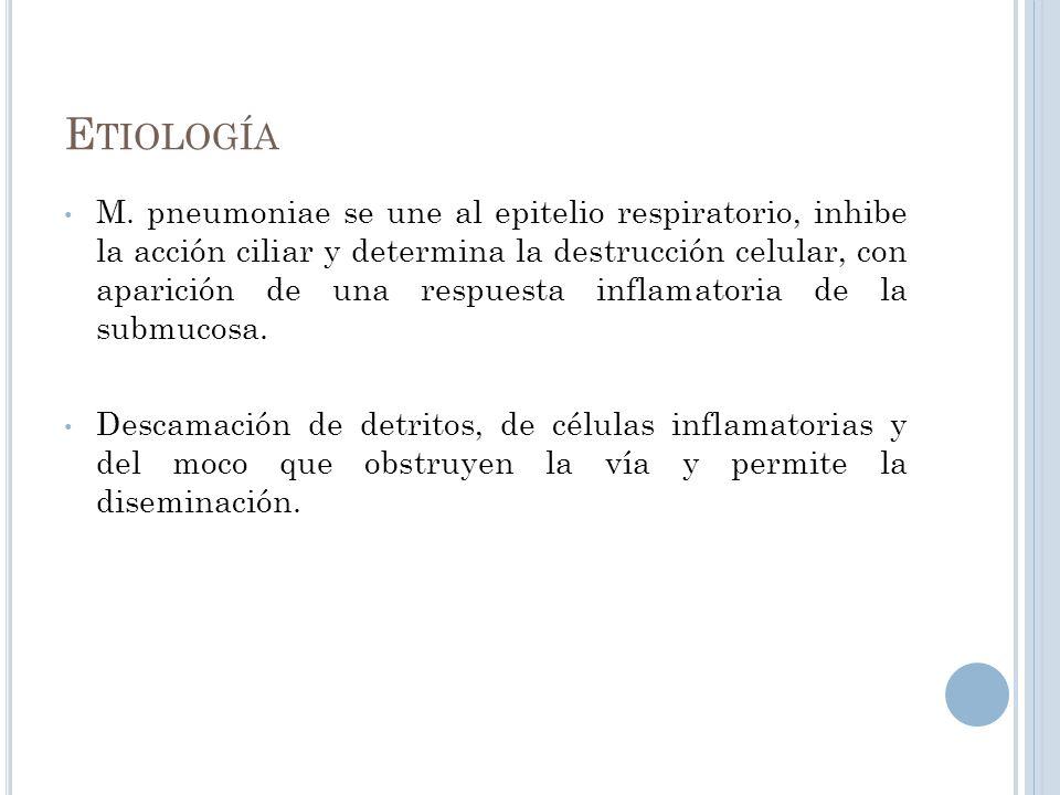 E TIOLOGÍA M. pneumoniae se une al epitelio respiratorio, inhibe la acción ciliar y determina la destrucción celular, con aparición de una respuesta i