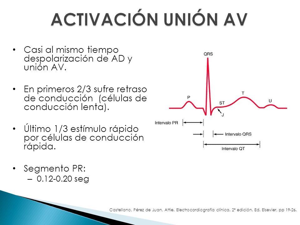 Casi al mismo tiempo despolarización de AD y unión AV. En primeros 2/3 sufre retraso de conducción (células de conducción lenta). Último 1/3 estímulo