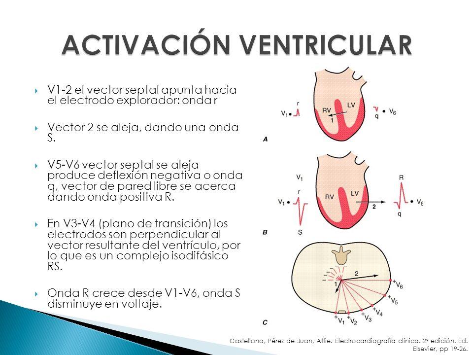 V1-2 el vector septal apunta hacia el electrodo explorador: onda r Vector 2 se aleja, dando una onda S. V5-V6 vector septal se aleja produce deflexión