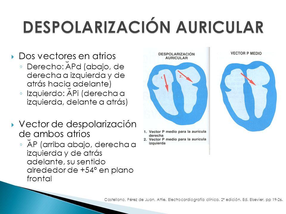 Dos vectores en atrios Derecho: APd (abajo, de derecha a izquierda y de atrás hacia adelante) Izquierdo: APi (derecha a izquierda, delante a atrás) Ve