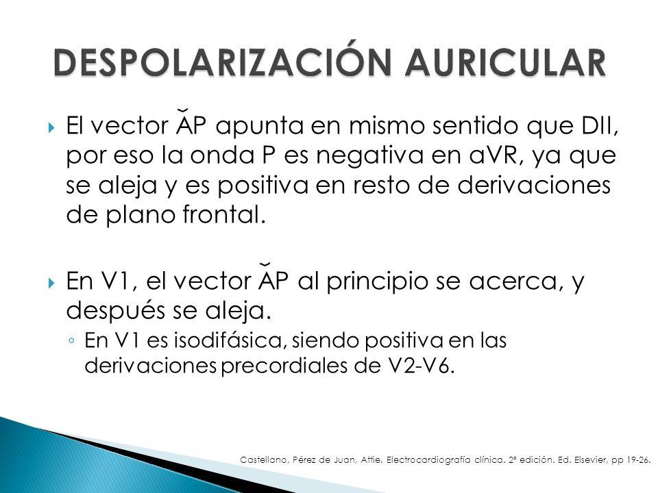 El vector AP apunta en mismo sentido que DII, por eso la onda P es negativa en aVR, ya que se aleja y es positiva en resto de derivaciones de plano fr