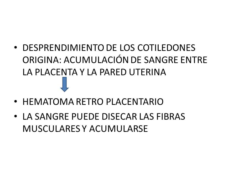 DESPRENDIMIENTO DE LOS COTILEDONES ORIGINA: ACUMULACIÓN DE SANGRE ENTRE LA PLACENTA Y LA PARED UTERINA HEMATOMA RETRO PLACENTARIO LA SANGRE PUEDE DISE