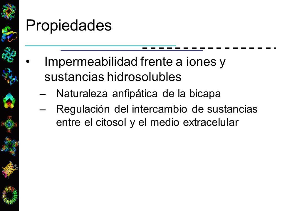 Impermeabilidad frente a iones y sustancias hidrosolubles –Naturaleza anfipática de la bicapa –Regulación del intercambio de sustancias entre el citos