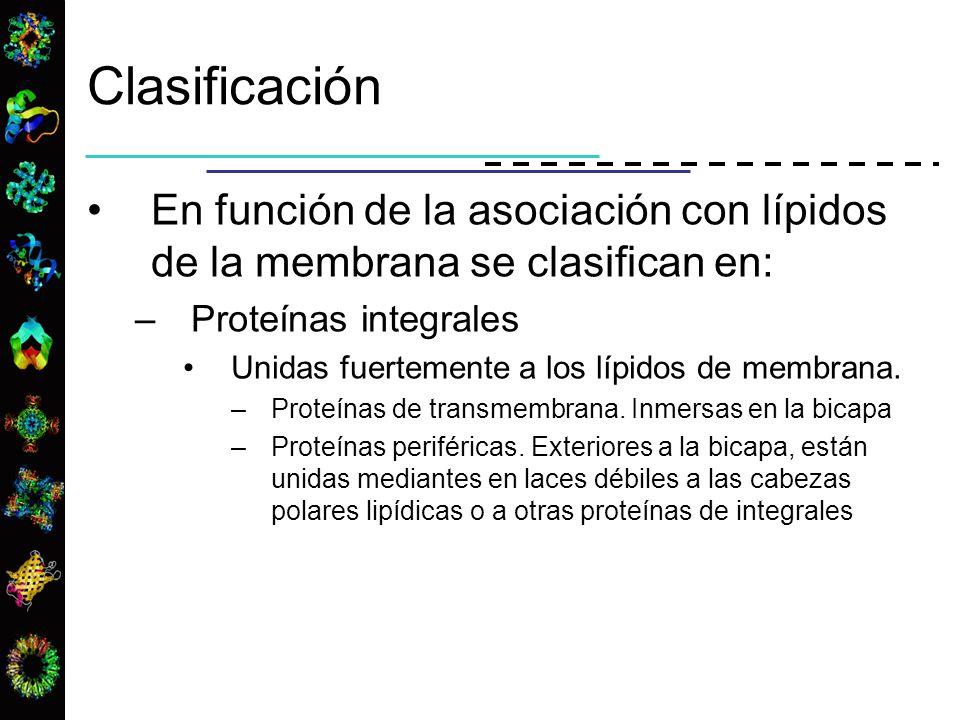 En función de la asociación con lípidos de la membrana se clasifican en: –Proteínas integrales Unidas fuertemente a los lípidos de membrana. –Proteína