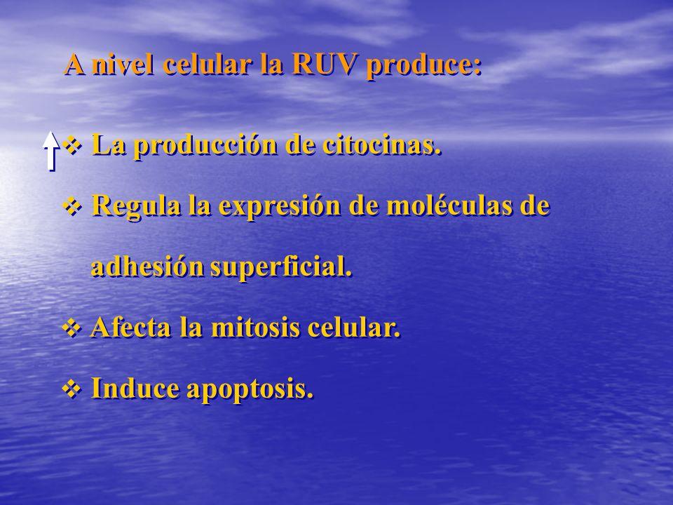 A nivel celular la RUV produce: La producción de citocinas. Regula la expresión de moléculas de adhesión superficial. Afecta la mitosis celular. Induc