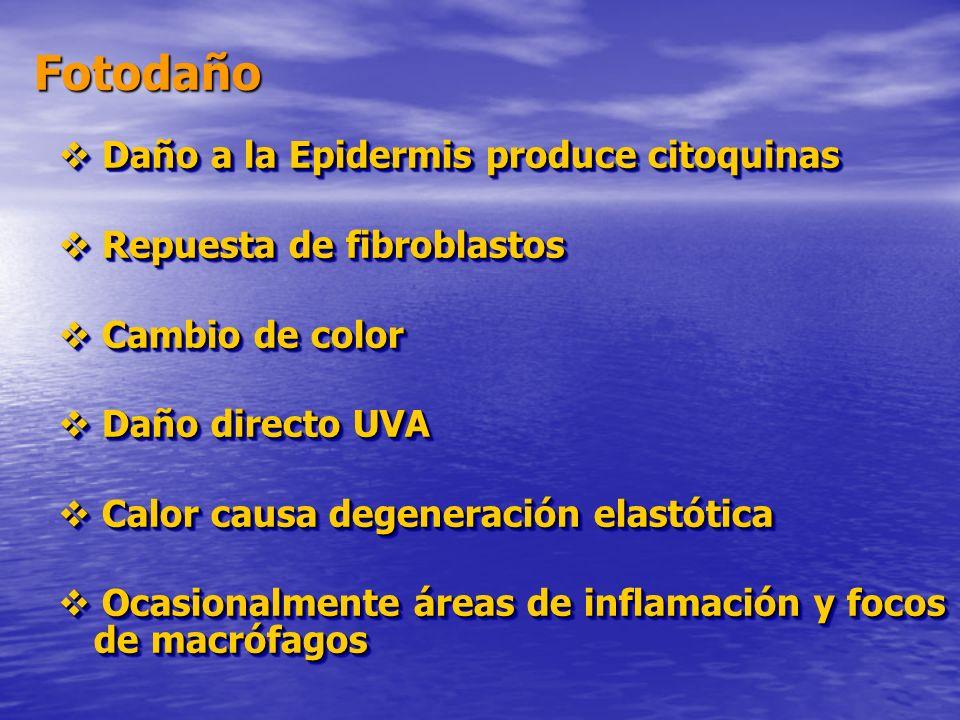 Fotodaño Daño a la Epidermis produce citoquinas Daño a la Epidermis produce citoquinas Repuesta de fibroblastos Repuesta de fibroblastos Cambio de col