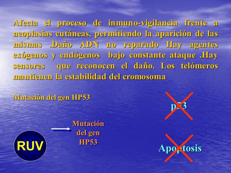Afecta el proceso de inmuno-vigilancia frente a neoplasias cutáneas, permitiendo la aparición de las mismas.Daño ADN no reparado Hay agentes exógenos