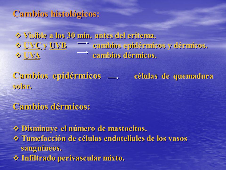 Cambios histológicos: Visible a los 30 min. antes del eritema. UVC y UVB cambios epidérmicos y dérmicos. UVA cambios dérmicos. Cambios epidérmicos cél