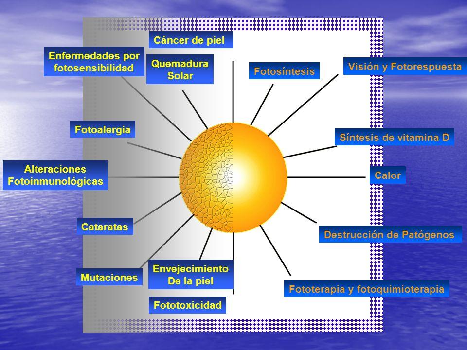 Visión y Fotorespuesta Fotosíntesis Síntesis de vitamina D Calor Destrucción de Patógenos Fototerapia y fotoquimioterapia Cáncer de piel Fototoxicidad