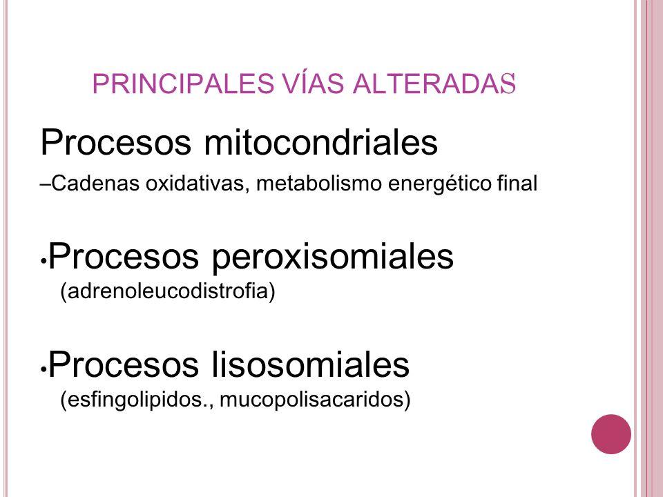 Procesos mitocondriales –Cadenas oxidativas, metabolismo energético final Procesos peroxisomiales (adrenoleucodistrofia) Procesos lisosomiales (esfing