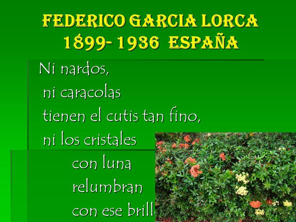 Federico Garcia Lorca 1899- 1936 España Ni nardos, Ni nardos, ni caracolas ni caracolas tienen el cutis tan fino, tienen el cutis tan fino, ni los cristales ni los cristales con luna con luna relumbran relumbran con ese brillo con ese brillo