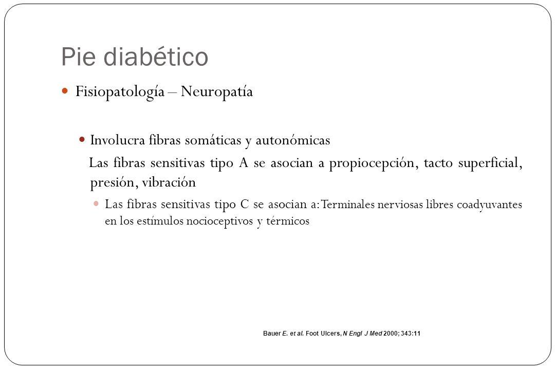 Pie diabético Fisiopatología – Neuropatía Involucra fibras somáticas y autonómicas Las fibras sensitivas tipo A se asocian a propiocepción, tacto supe