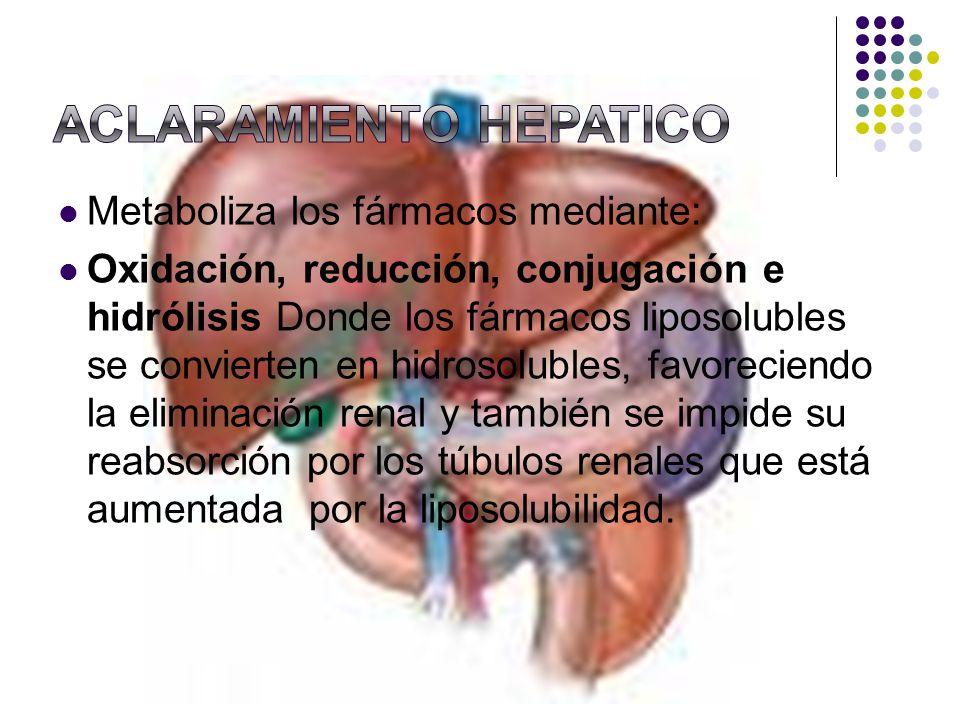 Metaboliza los fármacos mediante: Oxidación, reducción, conjugación e hidrólisis Donde los fármacos liposolubles se convierten en hidrosolubles, favor