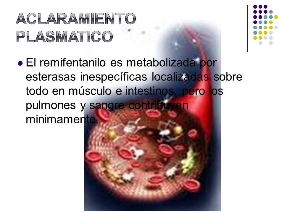 El remifentanilo es metabolizada por esterasas inespecíficas localizadas sobre todo en músculo e intestinos, pero los pulmones y sangre contribuyen mi