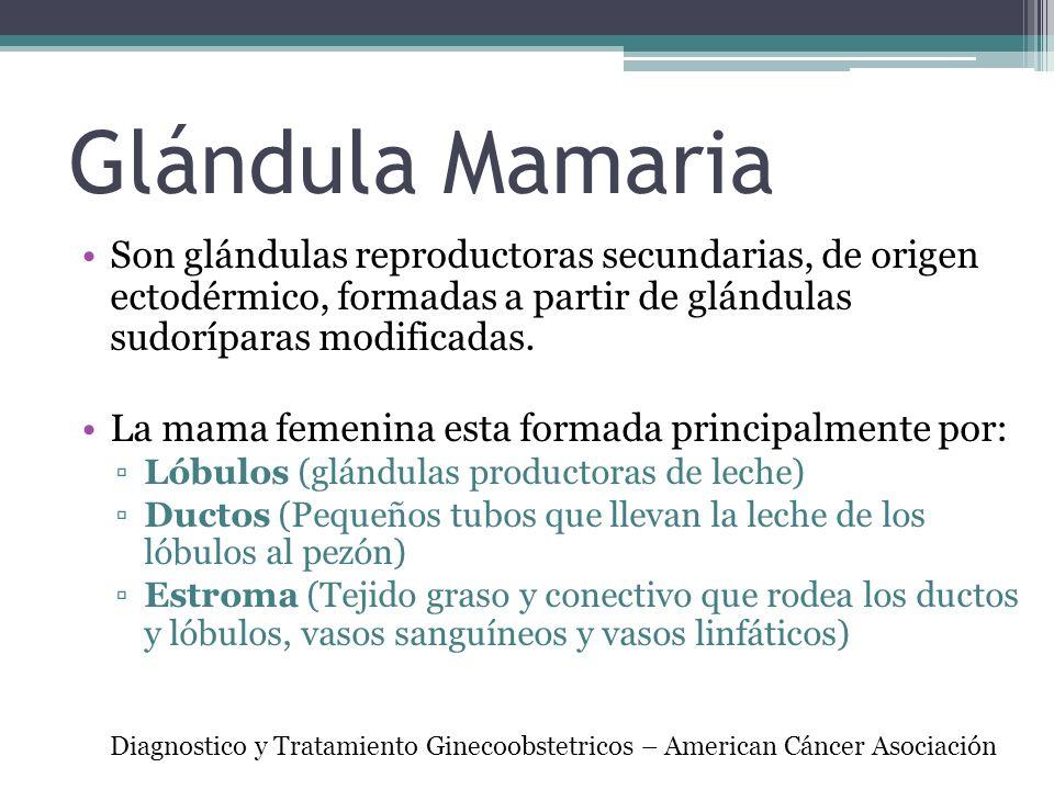 Glándula Mamaria Son glándulas reproductoras secundarias, de origen ectodérmico, formadas a partir de glándulas sudoríparas modificadas. La mama femen