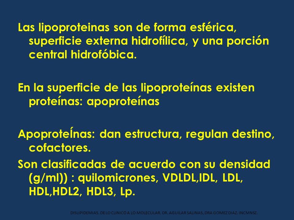 Las lipoproteinas son de forma esférica, superficie externa hidrofílica, y una porción central hidrofóbica. En la superficie de las lipoproteínas exis