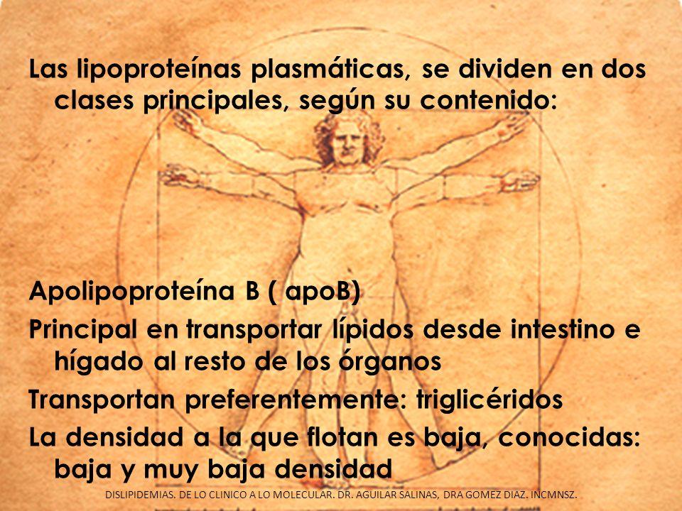 Las lipoproteínas plasmáticas, se dividen en dos clases principales, según su contenido: Apolipoproteína B ( apoB) Principal en transportar lípidos de