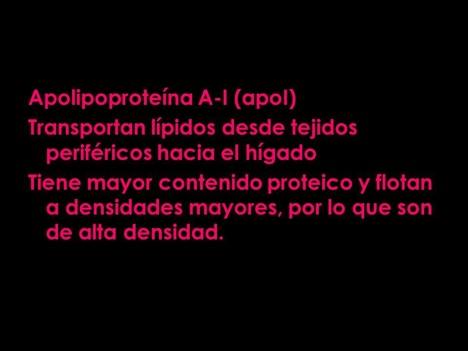 Apolipoproteína A-I (apoI) Transportan lípidos desde tejidos periféricos hacia el hígado Tiene mayor contenido proteico y flotan a densidades mayores,