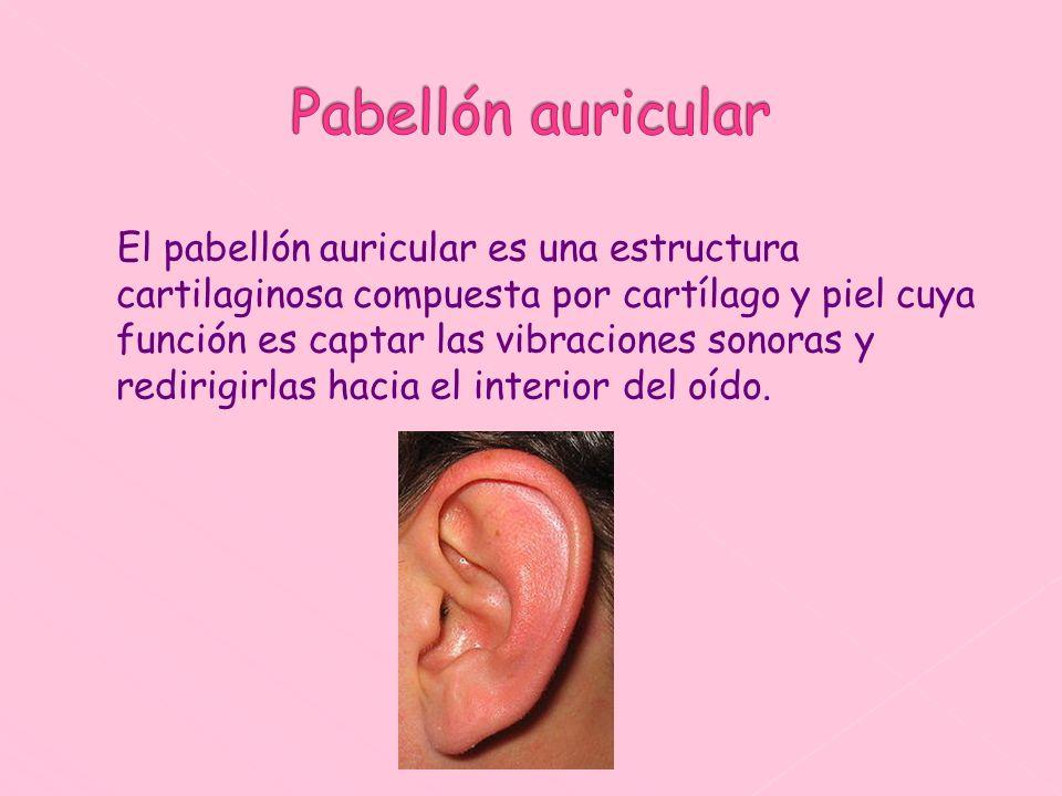 El pabellón auricular es una estructura cartilaginosa compuesta por cartílago y piel cuya función es captar las vibraciones sonoras y redirigirlas hac