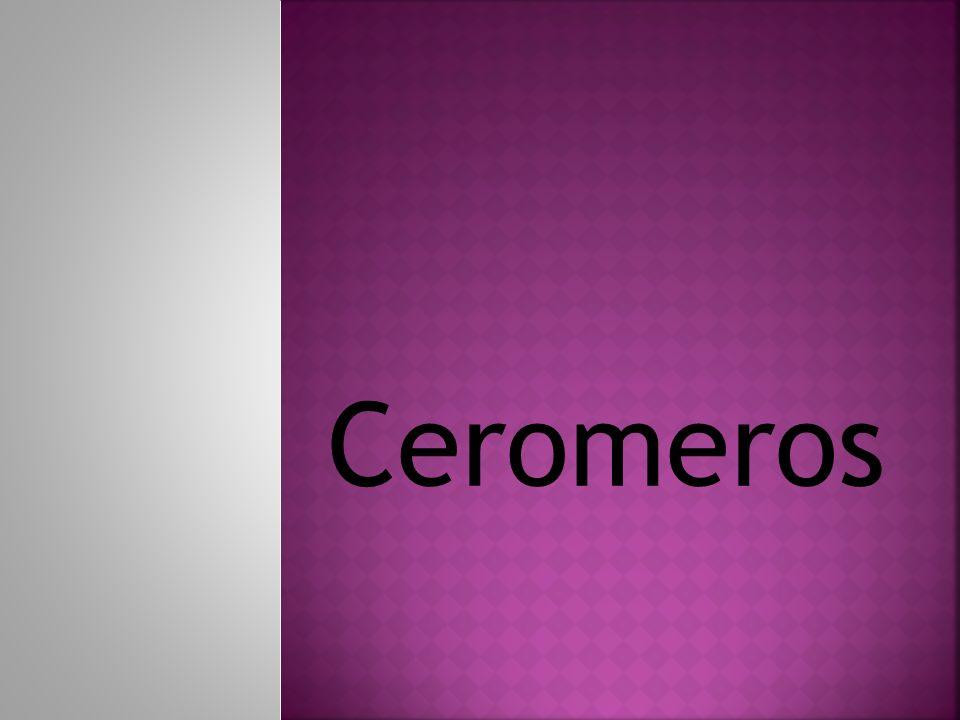 Ceromeros
