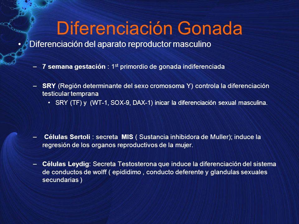 Diferenciación Gonada Diferenciación del aparato reproductor masculino –7 semana gestación : 1 st primordio de gonada indiferenciada –SRY (Región dete