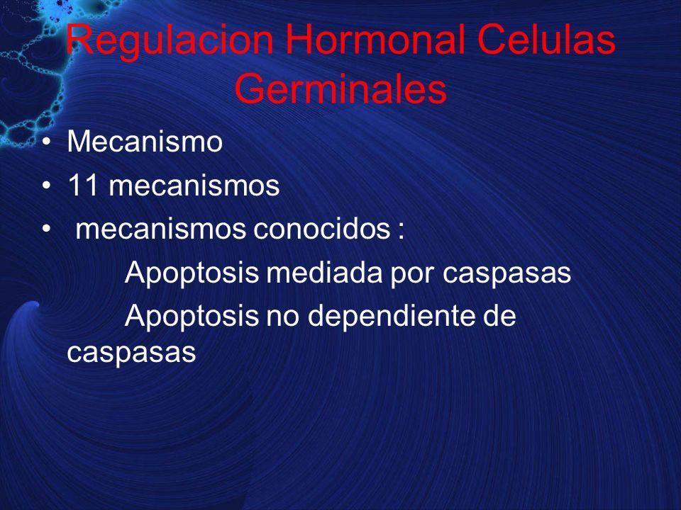 Regulacion Hormonal Celulas Germinales Mecanismo 11 mecanismos mecanismos conocidos : Apoptosis mediada por caspasas Apoptosis no dependiente de caspa