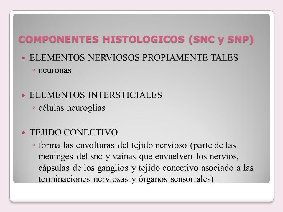 COMPONENTES HISTOLOGICOS (SNC y SNP) ELEMENTOS NERVIOSOS PROPIAMENTE TALES neuronas ELEMENTOS INTERSTICIALES células neuroglias TEJIDO CONECTIVO forma
