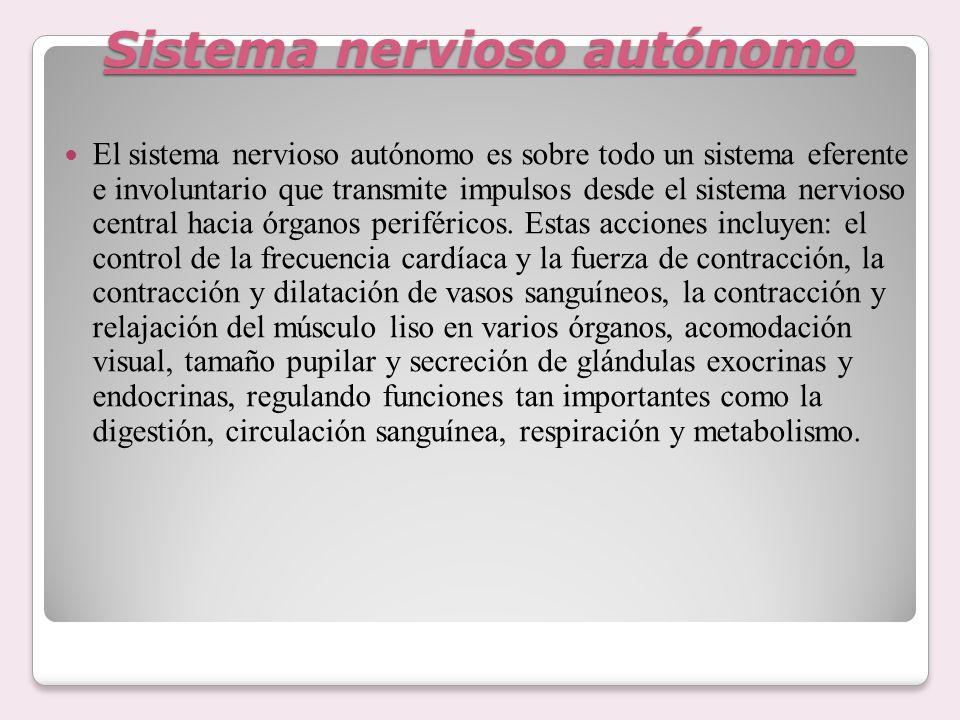 Sistema nervioso autónomo El sistema nervioso autónomo es sobre todo un sistema eferente e involuntario que transmite impulsos desde el sistema nervio