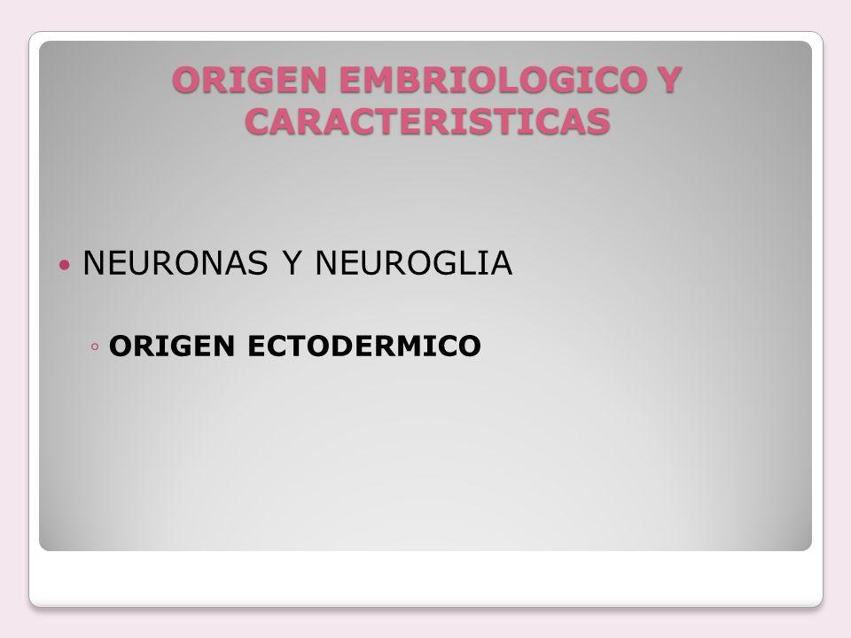 ORIGEN EMBRIOLOGICO Y CARACTERISTICAS NEURONAS Y NEUROGLIA ORIGEN ECTODERMICO