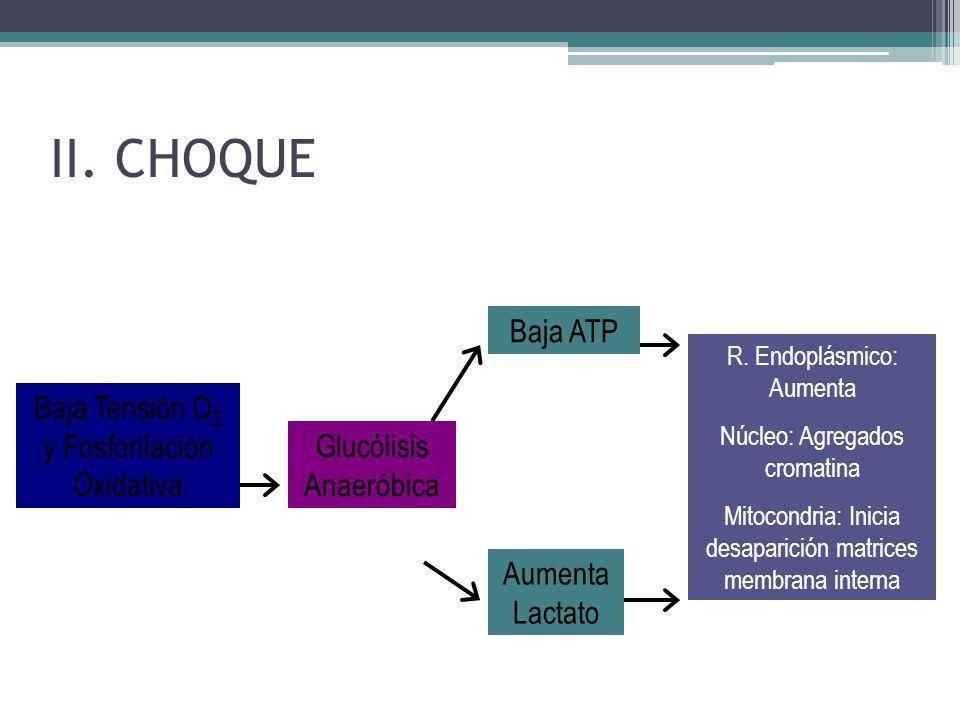 Baja Tensión O 2 y Fosforilación Oxidativa Glucólisis Anaeróbica Baja ATP Aumenta Lactato R. Endoplásmico: Aumenta Núcleo: Agregados cromatina Mitocon