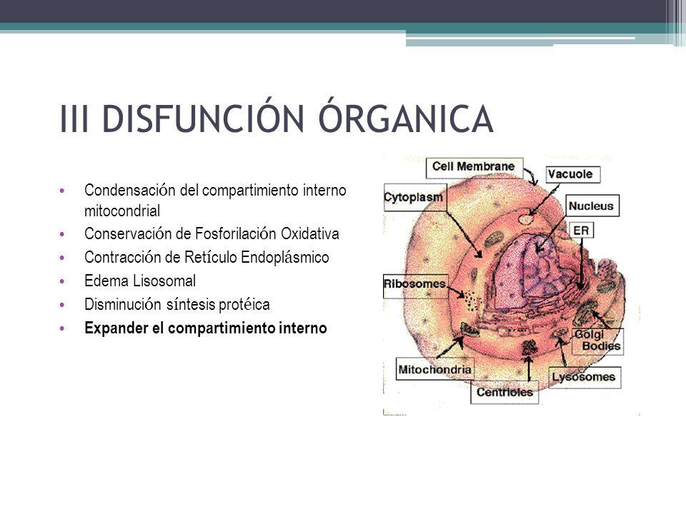 Condensaci ó n del compartimiento interno mitocondrial Conservaci ó n de Fosforilaci ó n Oxidativa Contracci ó n de Ret í culo Endopl á smico Edema Li