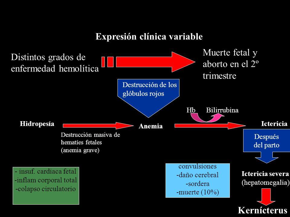Expresión clínica variable Anemia Destrucción de los glóbulos rojos HidropesíaIctericia Destrucción masiva de hematíes fetales (anemia grave) Hb Bilir