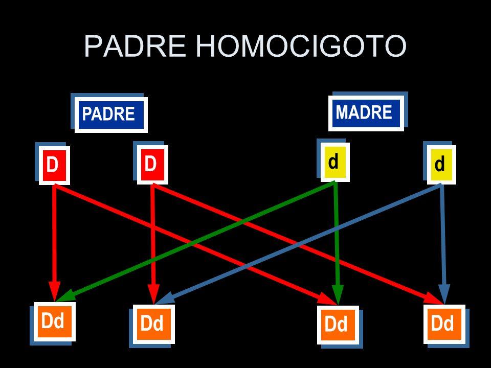 PADRE MADRE D D D D d d d d Dd PADRE HOMOCIGOTO