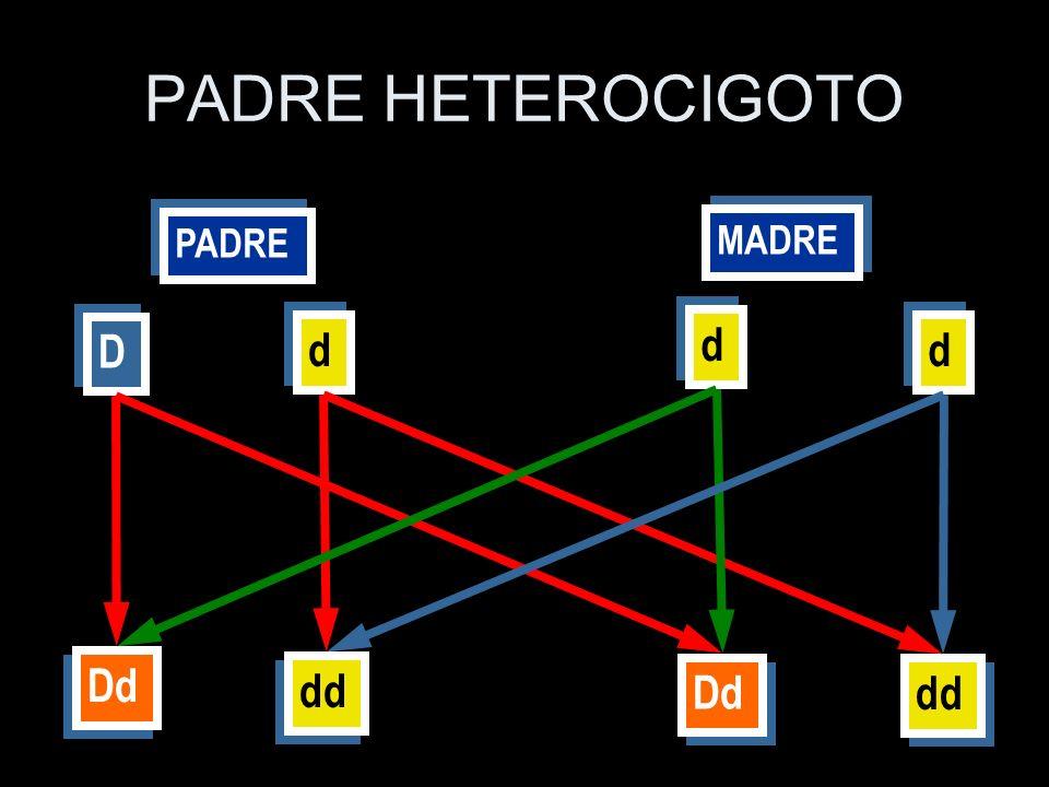 PADRE MADRE D D d d d d d d Dd dd Dd dd PADRE HETEROCIGOTO