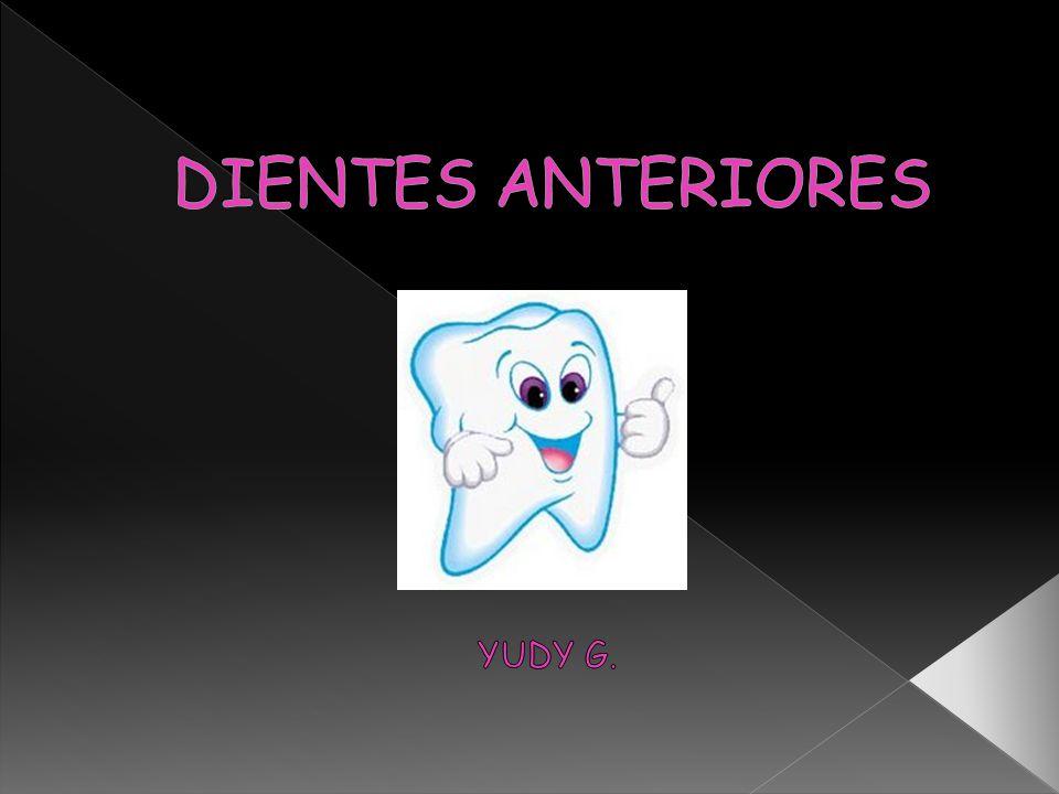 Órgano anatómico duro, enclavado en los alvéolos de los huesos maxilares a través de un tipo especial de articulación denominada gonfosis y en la que intervienen diferentes estructuras que lo conforman.
