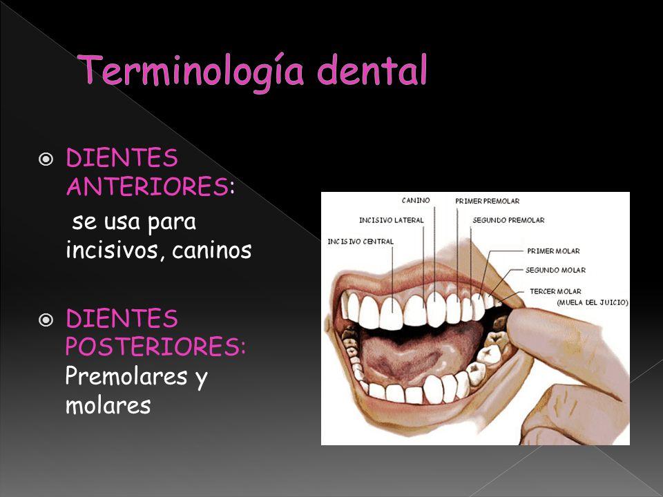 DIENTES ANTERIORES: se usa para incisivos, caninos DIENTES POSTERIORES: Premolares y molares