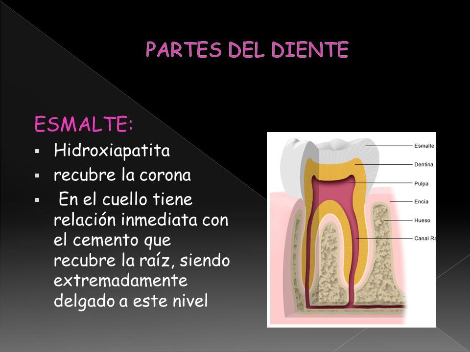 VESTIBULAR: mira hacia el vestibulo, mira hacia los labios en los dientes anteriores y en los posteriores hacia la mejilla LINGUAL: Hacia la lengua PALATINA