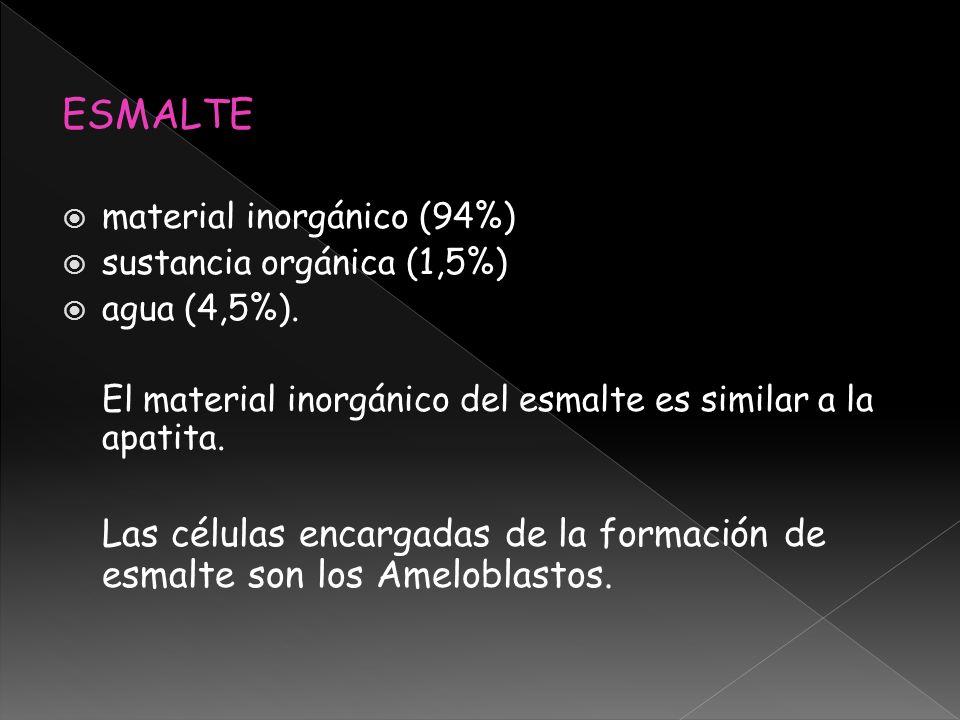 ESMALTE material inorgánico (94%) sustancia orgánica (1,5%) agua (4,5%). El material inorgánico del esmalte es similar a la apatita. Las células encar