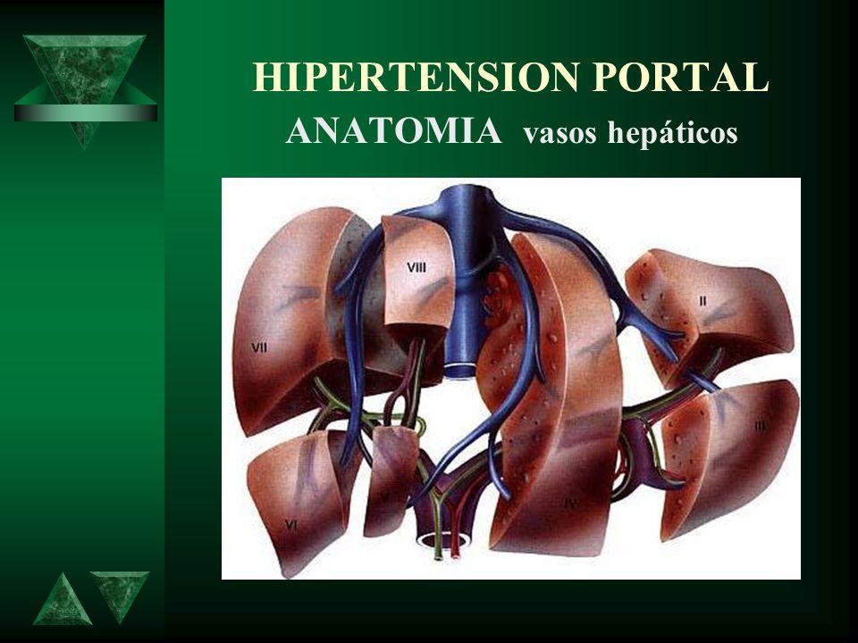 HIPERTENSION PORTAL ANATOMIA vasos hepáticos