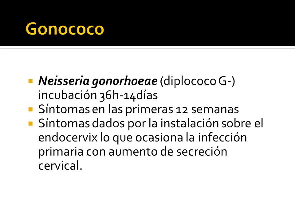 Neisseria gonorhoeae (diplococo G-) incubación 36h-14días Síntomas en las primeras 12 semanas Síntomas dados por la instalación sobre el endocervix lo