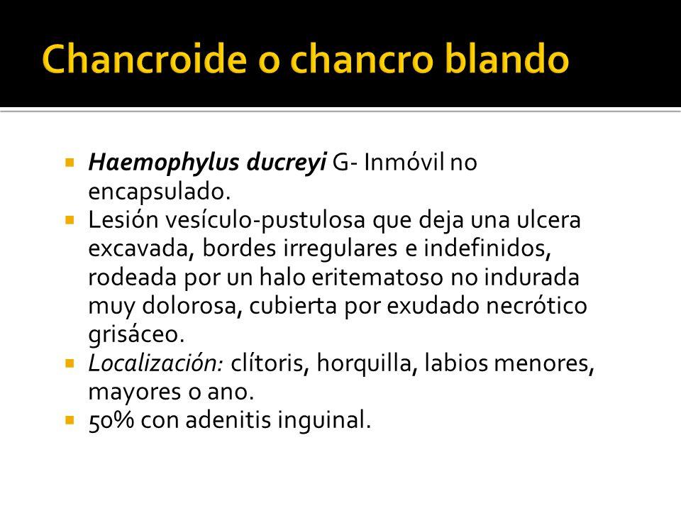 Haemophylus ducreyi G- Inmóvil no encapsulado. Lesión vesículo-pustulosa que deja una ulcera excavada, bordes irregulares e indefinidos, rodeada por u
