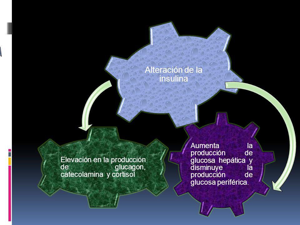 Aumenta la producción de glucosa hepática y disminuye la producción de glucosa periférica. Elevación en la producción de glucagon, catecolamina y cort